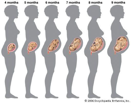 Conferenza sui cambiamenti fisici emotivi e relazionali della donna in gravidanza
